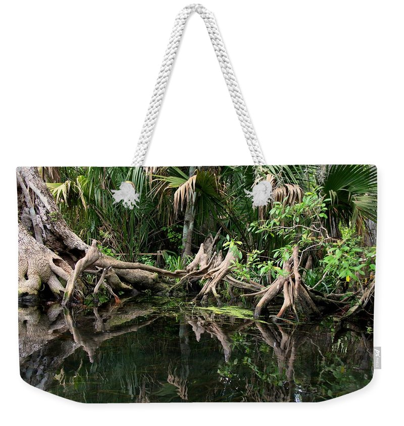 Cypress Tree Weekender Tote Bag featuring the photograph Cypress Swamp by Barbara Bowen