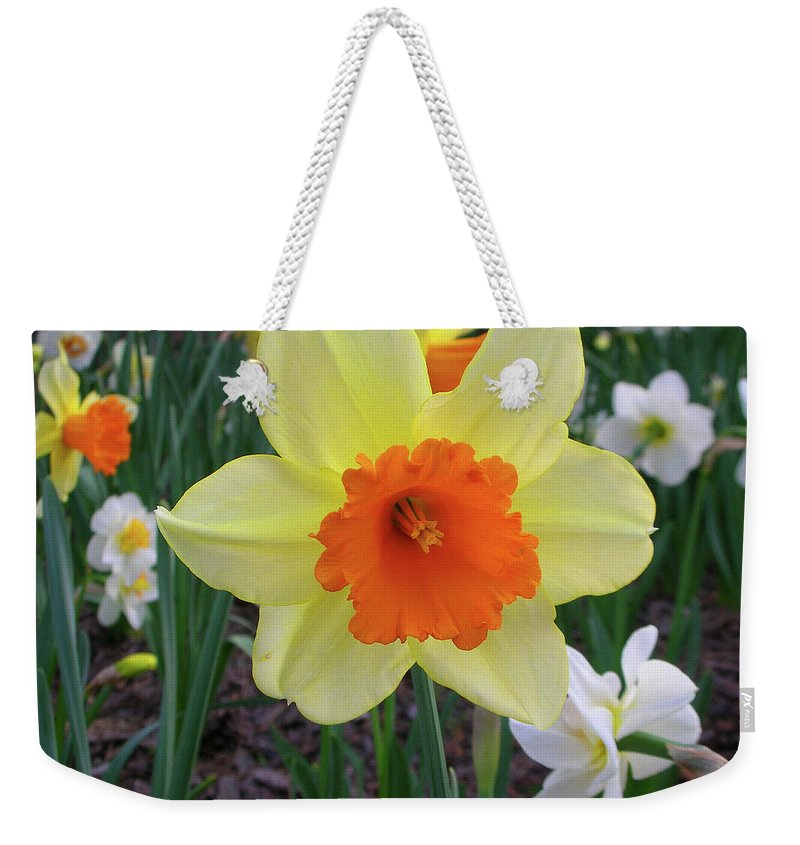 Flowers Weekender Tote Bag featuring the photograph Daffodil 0796 by Guy Whiteley