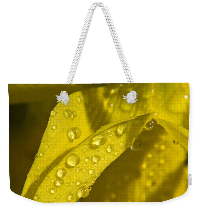 Daffodil Weekender Tote Bag featuring the photograph Daffodil Dew by Teresa Mucha