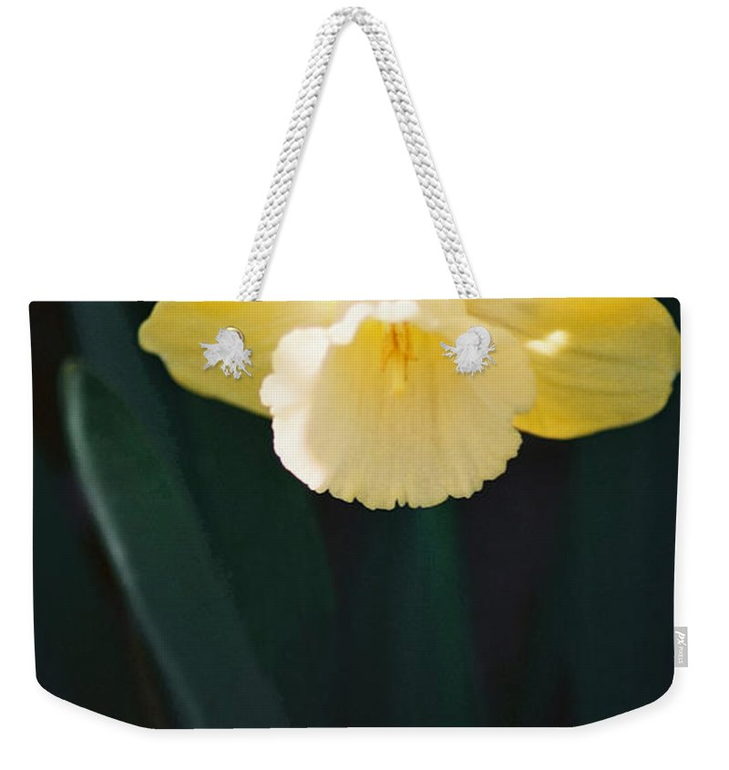 Daffodil Weekender Tote Bag featuring the photograph Daffodil by Steve Karol