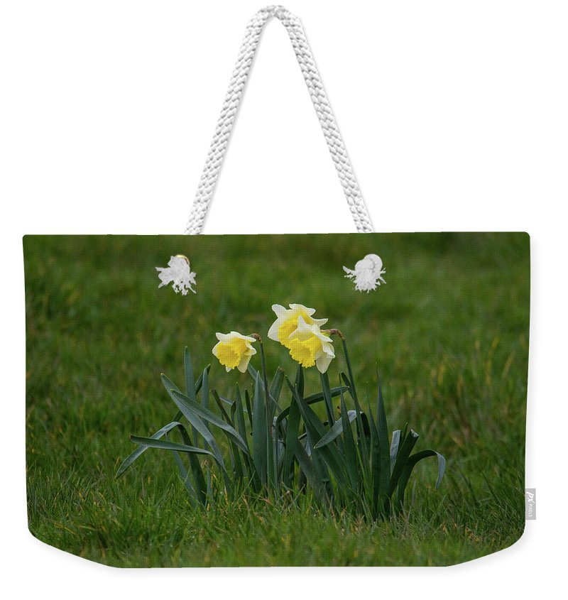 Daffodils Weekender Tote Bag featuring the photograph Daffodils by Stephen Jenkins
