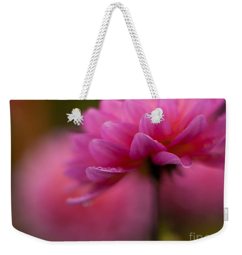 Dahlia Weekender Tote Bag featuring the photograph Dahlia Drops by Mike Reid