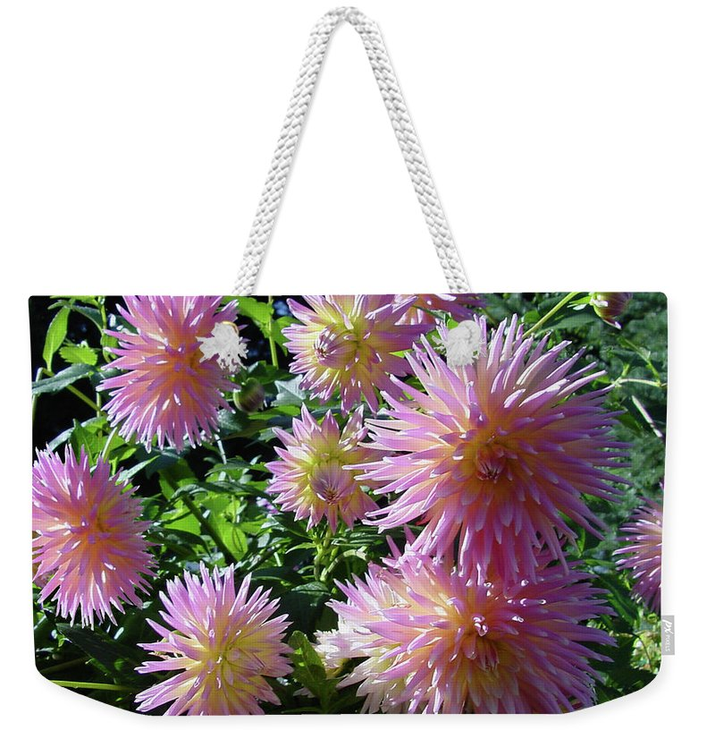 Group Weekender Tote Bag featuring the photograph Dahlia Group by Shirley Heyn
