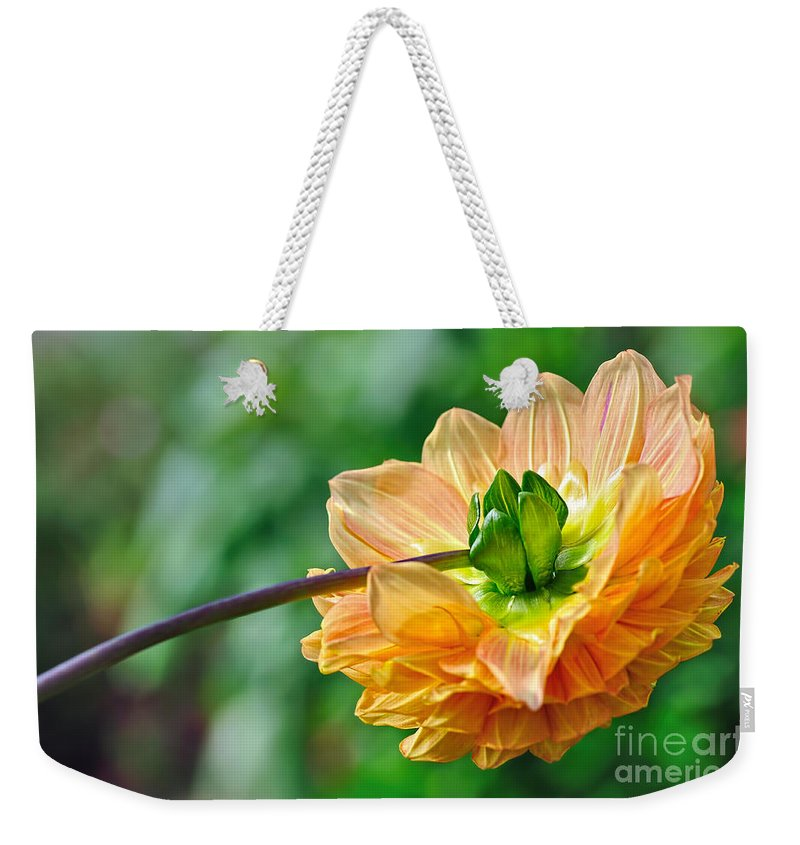 Photography Weekender Tote Bag featuring the photograph Dahlia Resting by Kaye Menner