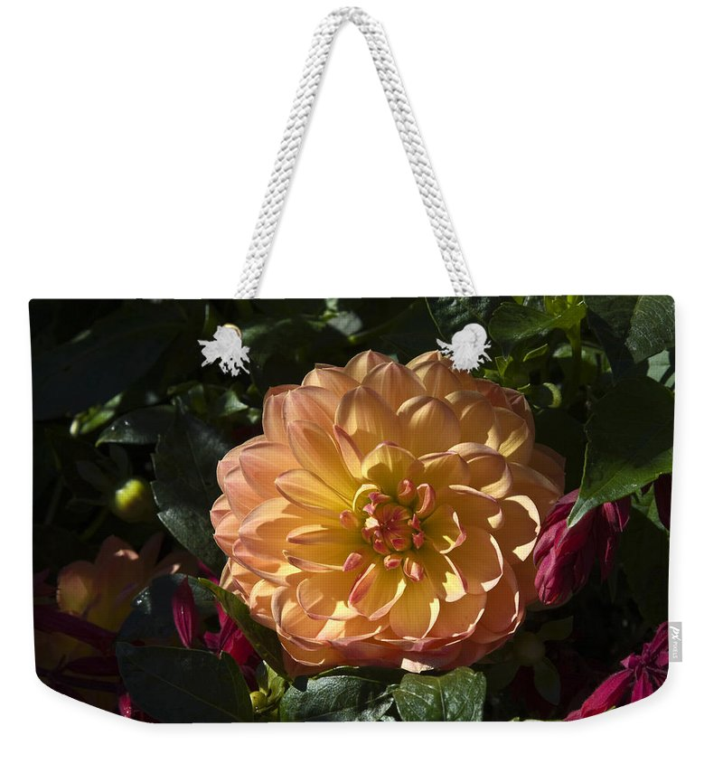 Dahlia Weekender Tote Bag featuring the photograph Dahlia by Sally Weigand
