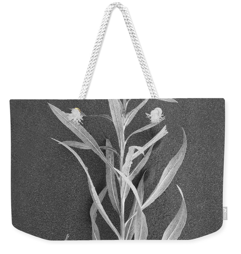 Dahlia Weekender Tote Bag featuring the photograph Dahlia by Skip Hunt