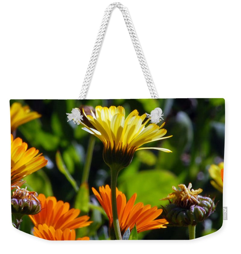 Dasy Weekender Tote Bag featuring the photograph Daisies by Amy Fose
