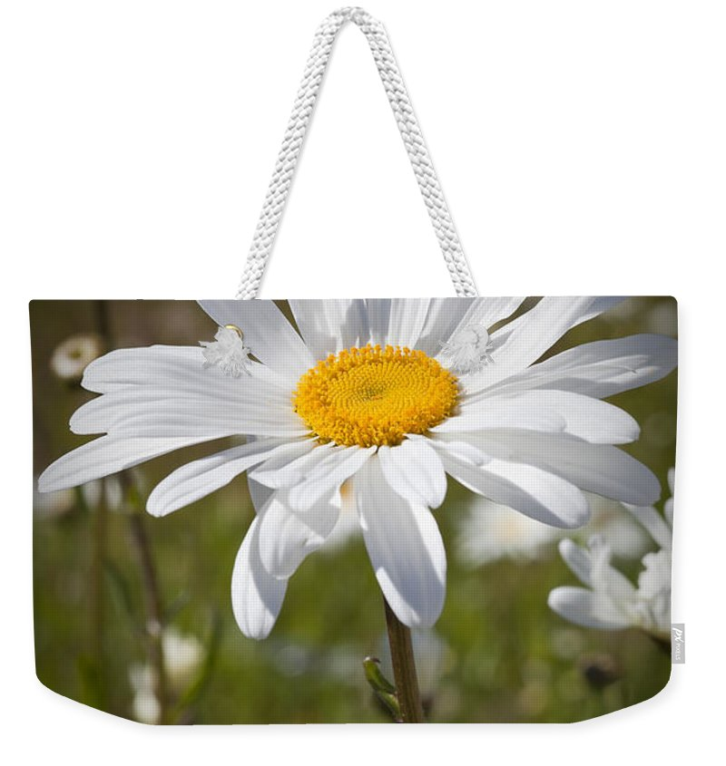 Daisy Weekender Tote Bag featuring the photograph Daisy 1 by Kelley King