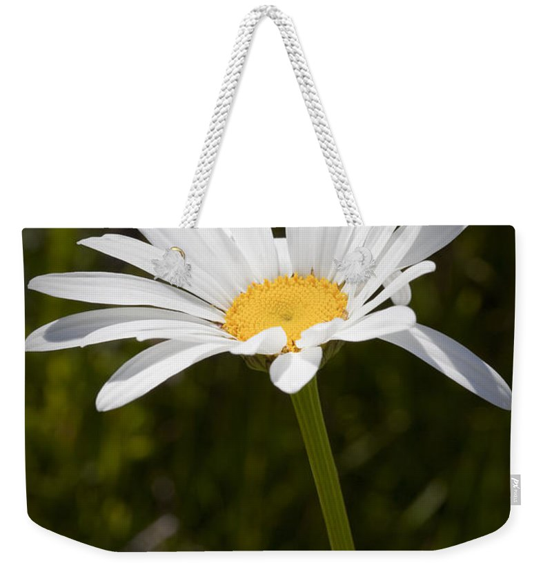 Daisy Weekender Tote Bag featuring the photograph Daisy 3 by Kelley King