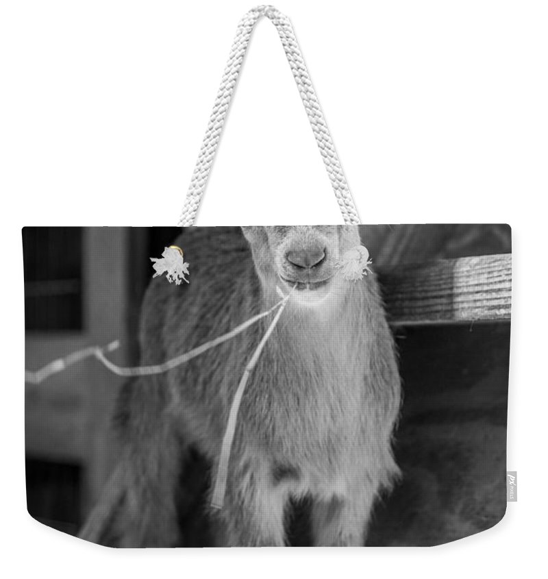Big Cat Habitat Weekender Tote Bag featuring the photograph Daisy, Black And White by Liesl Walsh