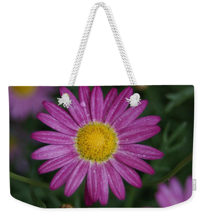 Flower Weekender Tote Bag featuring the photograph Daisy by Heidi Poulin