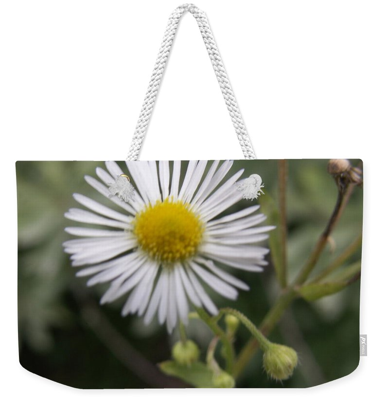 Macro Weekender Tote Bag featuring the photograph Daisy In White by Alexis Ketner