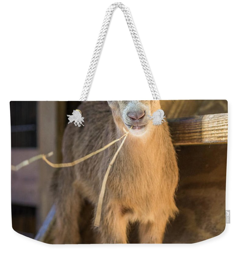 Big Cat Habitat Weekender Tote Bag featuring the photograph Daisy by Liesl Walsh