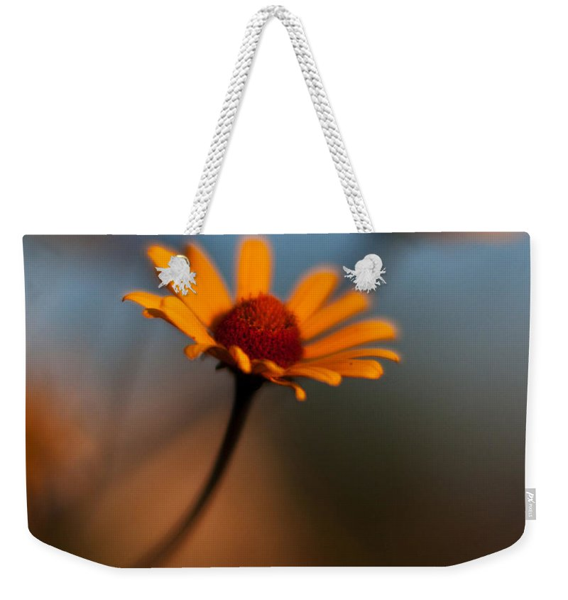 Daisy Weekender Tote Bag featuring the photograph Daisy Standout by Mike Reid