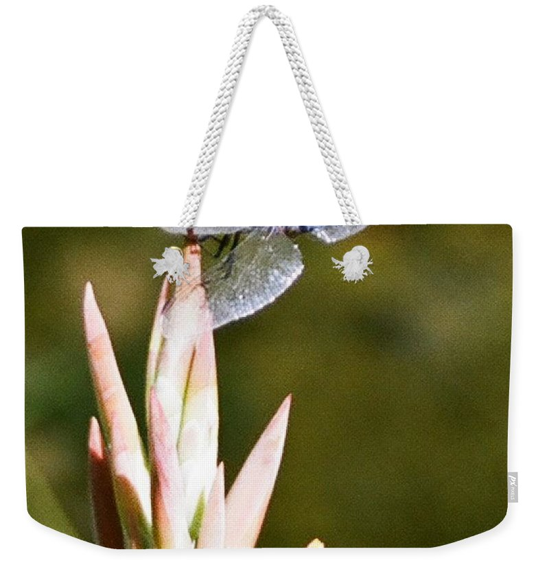 Dragonfly Weekender Tote Bag featuring the photograph Damselfly by Dean Triolo
