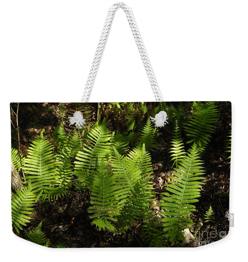Ferns Weekender Tote Bag featuring the photograph Dancing Ferns by David Lee Thompson