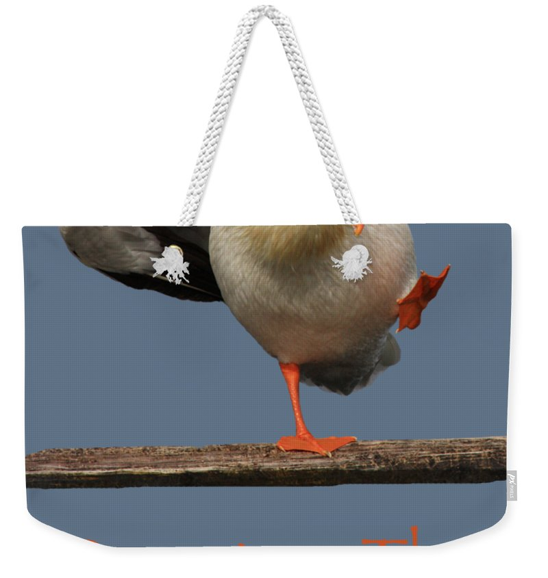 Pelican Weekender Tote Bag featuring the photograph Dancing The Funky Chicken by Shane Bechler