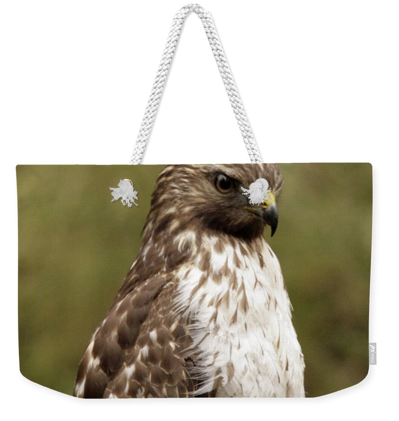 Bird Weekender Tote Bag featuring the photograph Dark Beauty by Phill Doherty