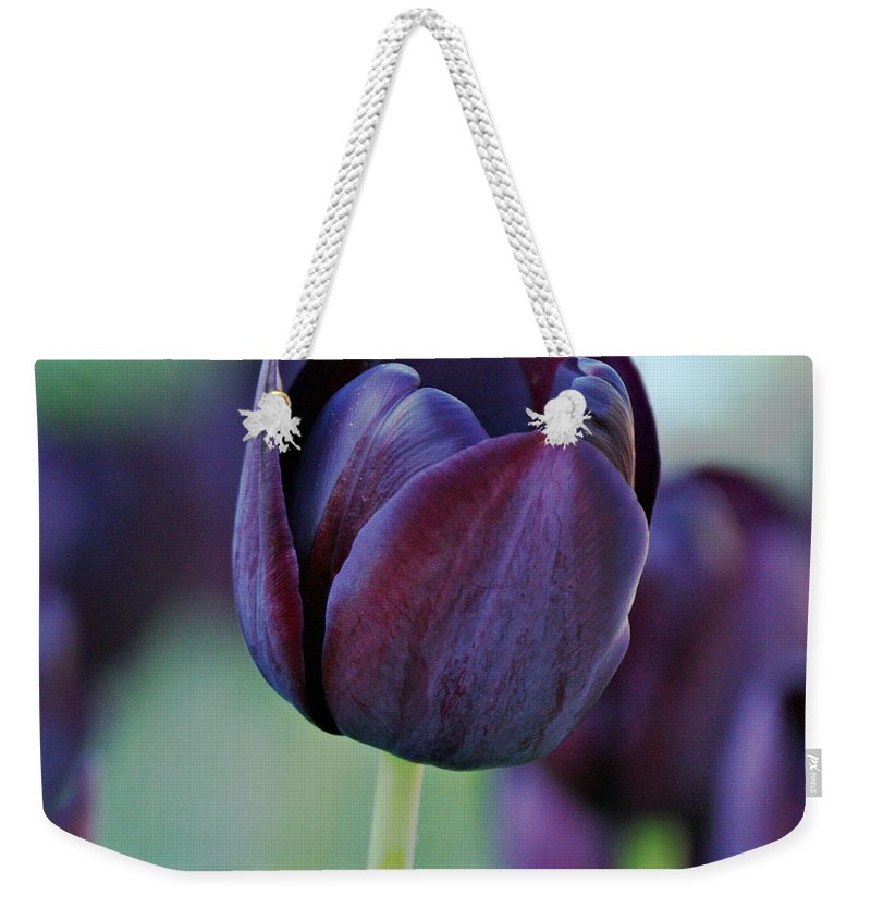 Tulips Weekender Tote Bag featuring the photograph Dark Purple Tulip by Sandy Keeton