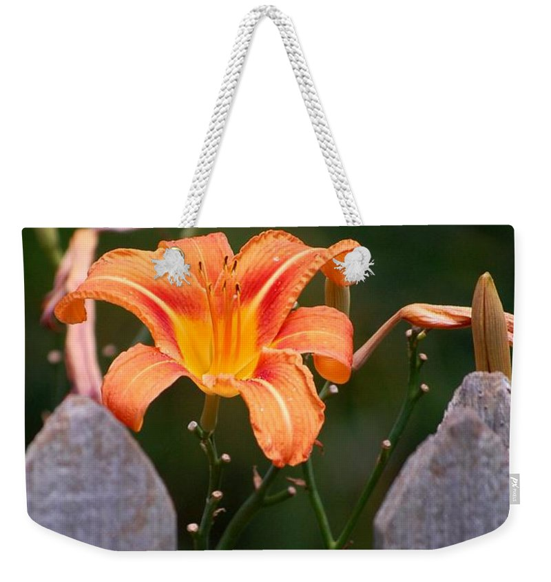 Digital Photograph Weekender Tote Bag featuring the photograph Day Lilly Fenced In by David Lane