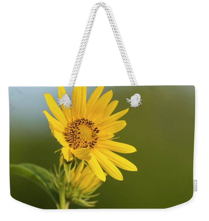 Kansas Weekender Tote Bag featuring the photograph Ddp Djd Sunflower 2639 by David Drew