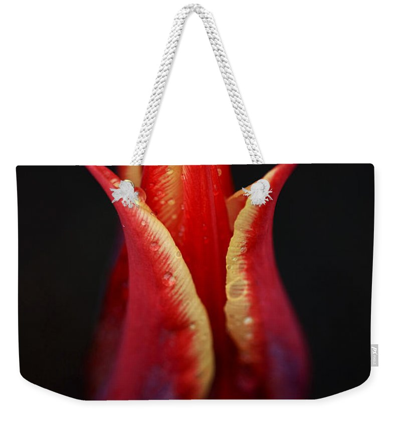 Tulip Weekender Tote Bag featuring the photograph Decorative Tulip by Deborah Benoit