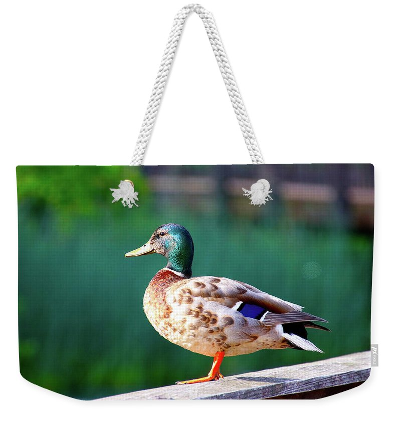 Weekender Tote Bag featuring the photograph Decoy by Tony Umana
