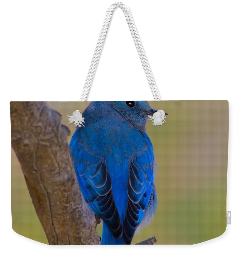 Bluebird Weekender Tote Bag featuring the photograph Deep Blue by Shane Bechler
