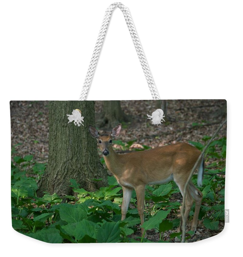 Animal Weekender Tote Bag featuring the photograph Deer 7414 by Michael Peychich