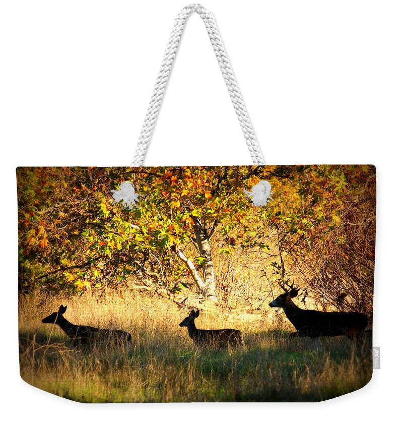 Landscape Weekender Tote Bag featuring the photograph Deer Family In Sycamore Park by Carol Groenen