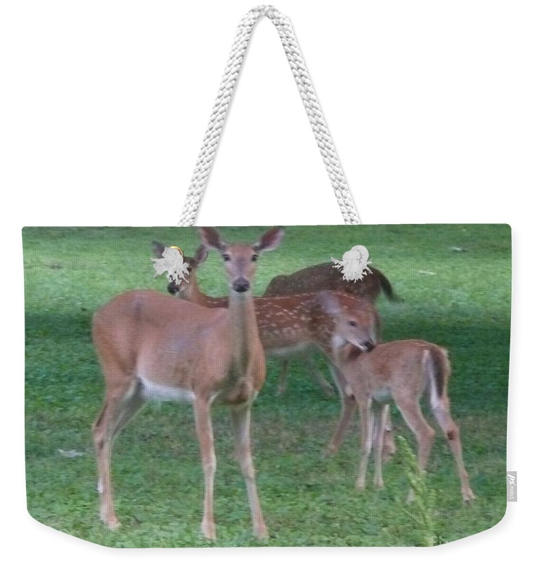 Deer Weekender Tote Bag featuring the photograph Deer Family Out For Evening Stroll by Barb Montanye Meseroll