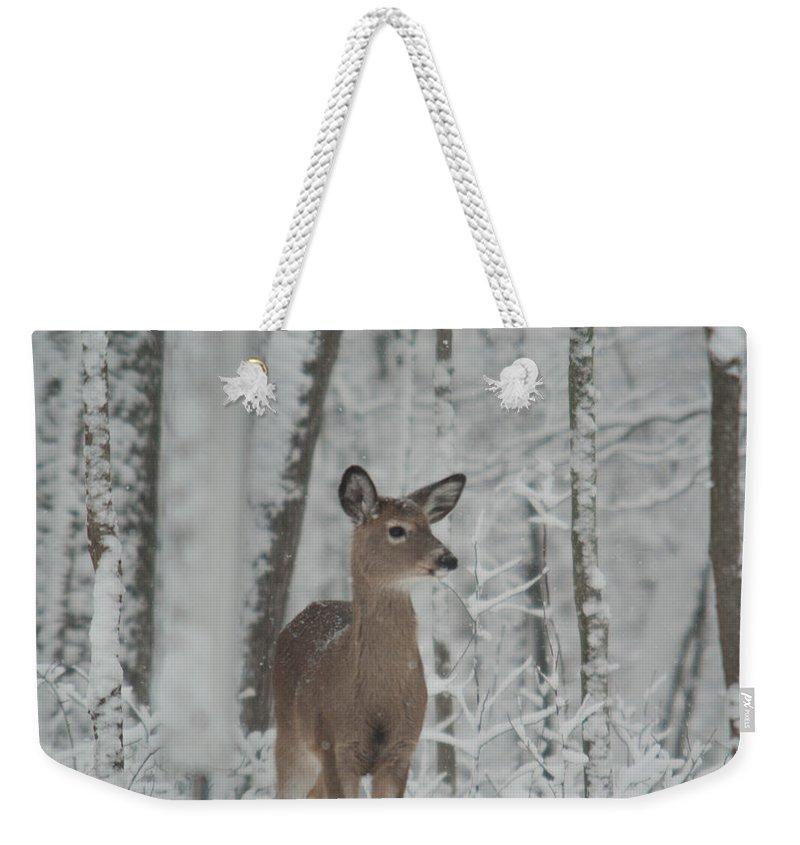 Deer Weekender Tote Bag featuring the photograph Deer In The Snow by Douglas Barnett