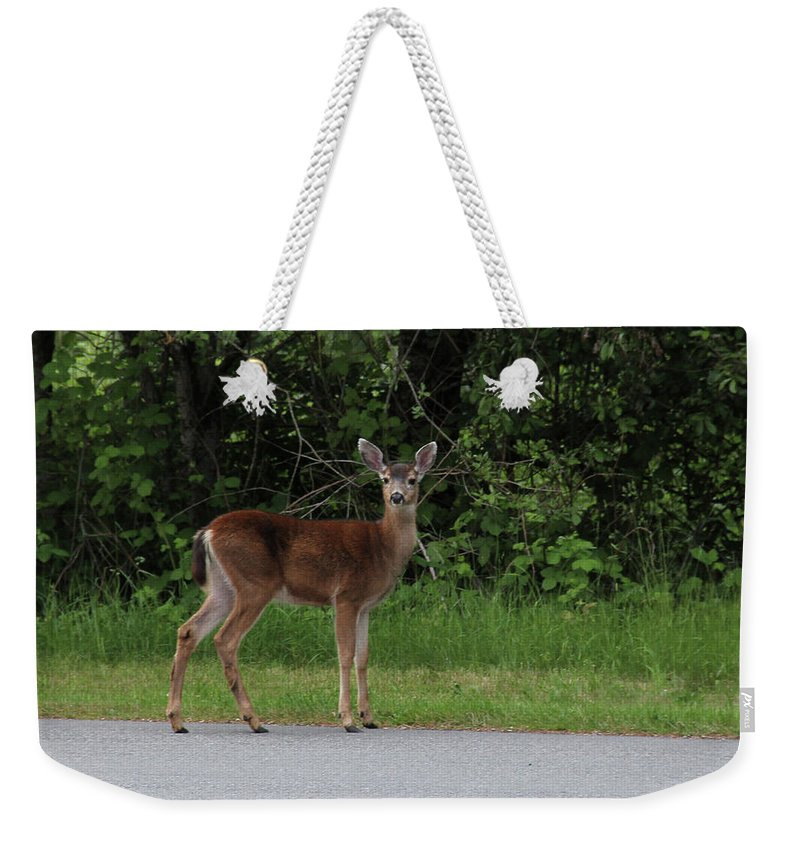 Deer Weekender Tote Bag featuring the photograph Deer On Road by Roger Patterson