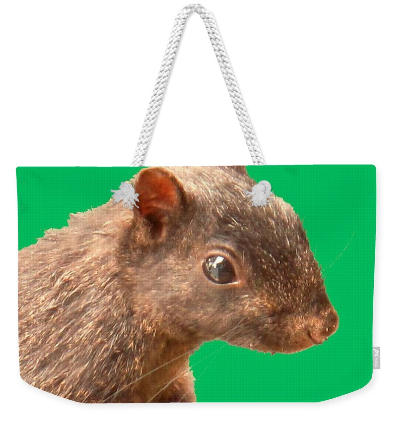 Squirrel Weekender Tote Bag featuring the photograph Definately Bright Eyed by Ian MacDonald