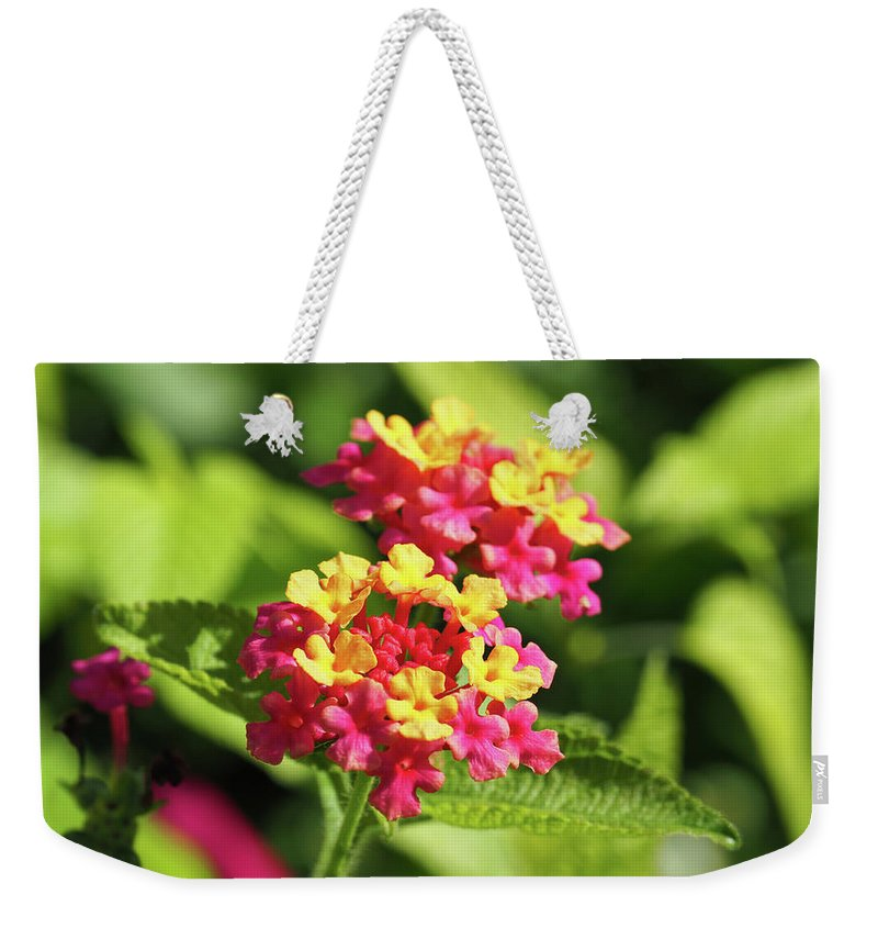 Floral Weekender Tote Bag featuring the photograph Delicate Cluster by BiR Fotos