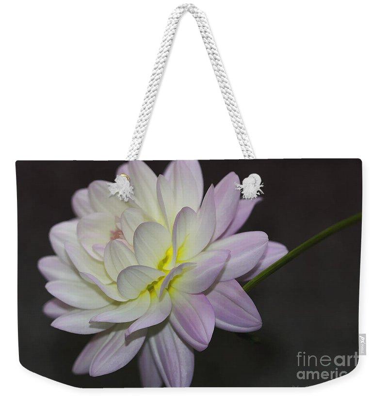 Flower Weekender Tote Bag featuring the photograph Delicate Dahlia Balance by Deborah Benoit