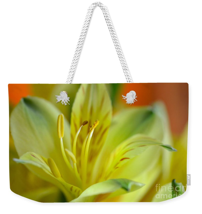 Yellow Alstroemeria Weekender Tote Bag featuring the photograph Delicate Darling by Deb Halloran