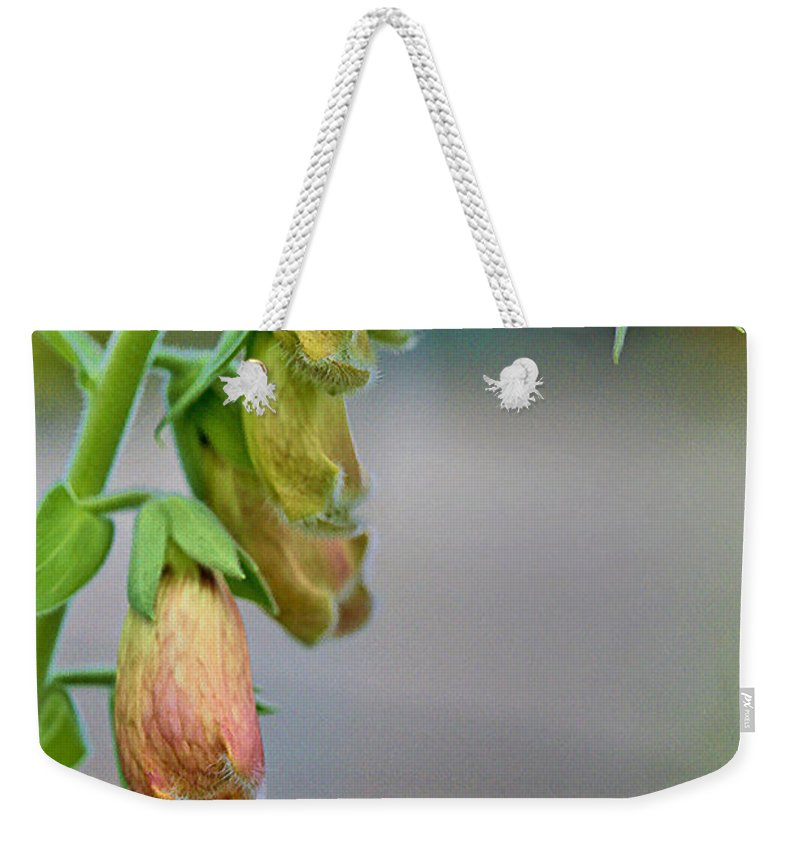 Flower Weekender Tote Bag featuring the photograph Delicate Hanging Blossom by Deborah Benoit