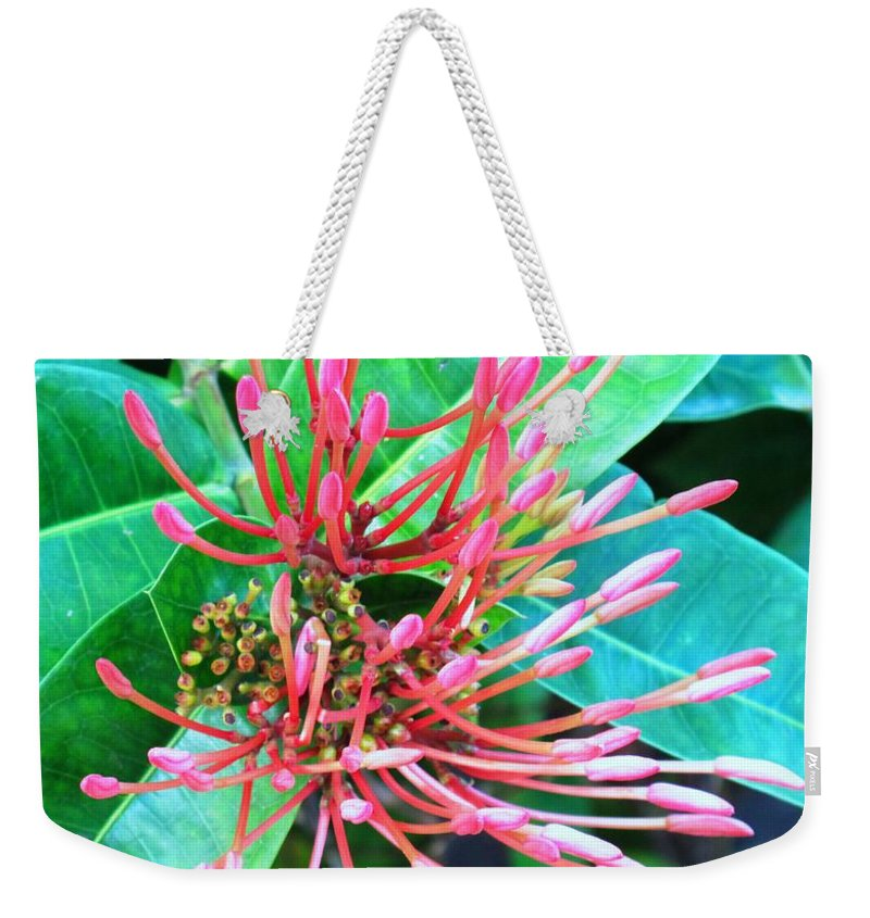Flower Weekender Tote Bag featuring the photograph Delicate Pink Flower by Ian MacDonald