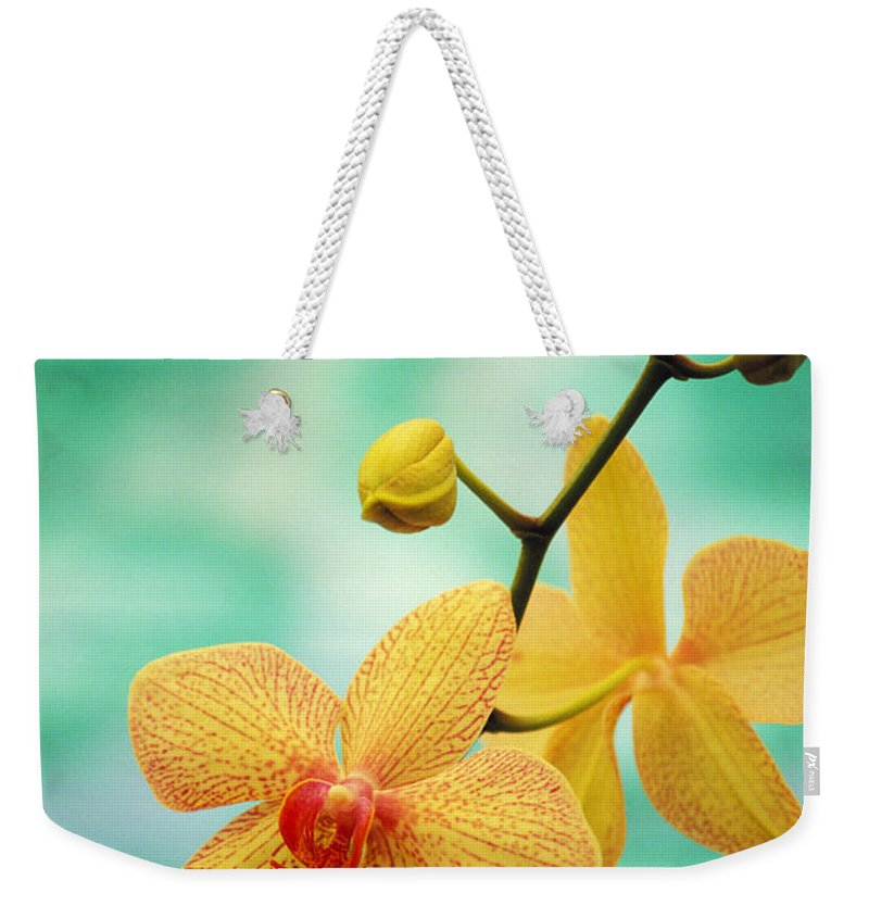 26-csm0163 Weekender Tote Bag featuring the photograph Dendrobium by Allan Seiden - Printscapes