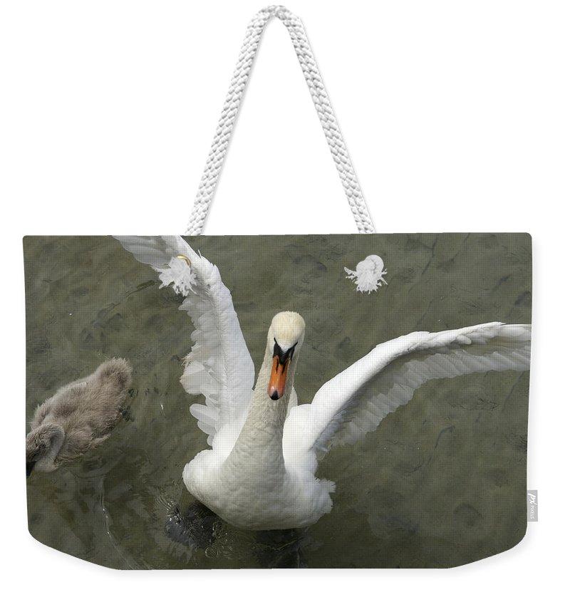 Nobody Weekender Tote Bag featuring the photograph Denmark, Copenhagen Swan Flaps Her Wing by Keenpress