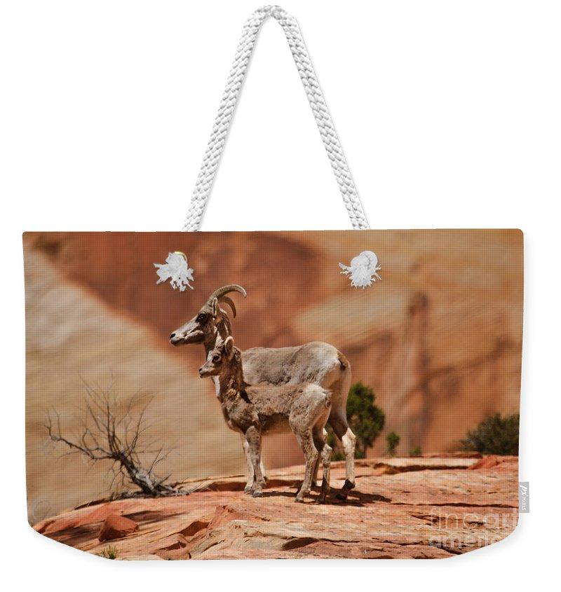 Sheep Weekender Tote Bag featuring the photograph Desert Bighorn Sheep by Robert Bales