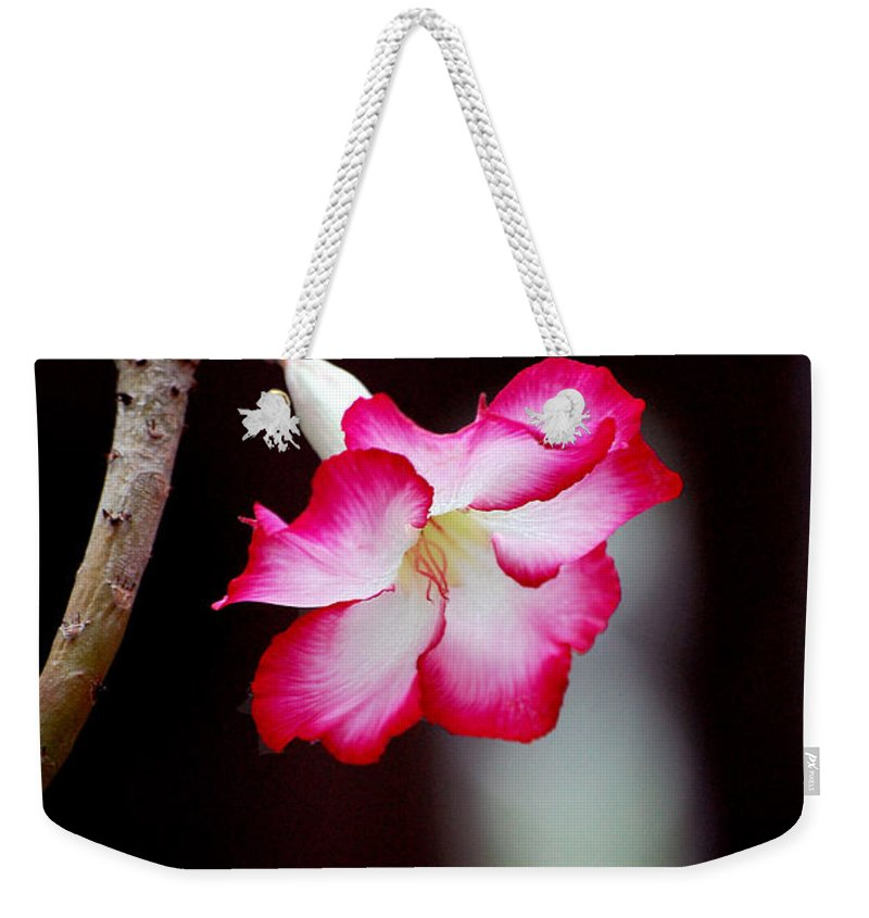 Flower Weekender Tote Bag featuring the photograph Desert Flower by Robert Meanor