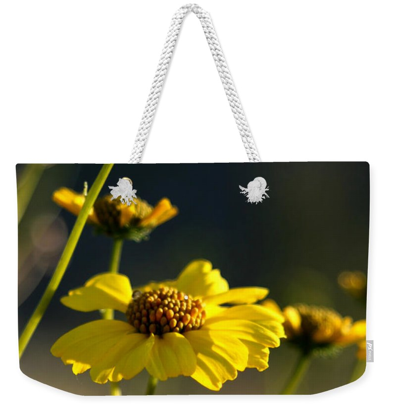 Desert Sunflower Weekender Tote Bag featuring the photograph Desert Sunflower by Chris Brannen