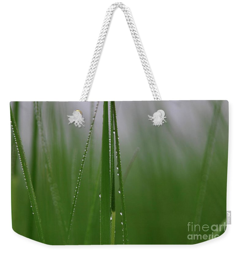 Grass Weekender Tote Bag featuring the photograph Dew Drops by Karol Livote