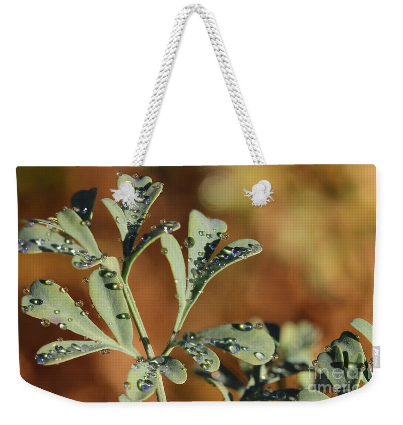Rue Weekender Tote Bag featuring the photograph Dew On Rue by Karen Adams