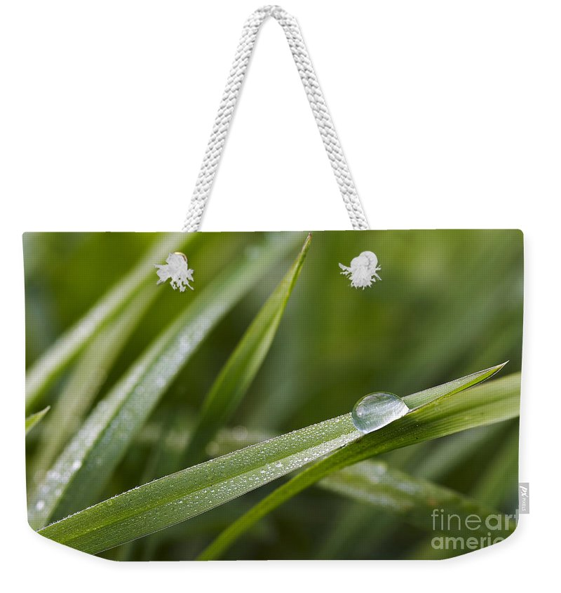 Grass Weekender Tote Bag featuring the photograph Dewy Drop On The Grass by Michal Boubin