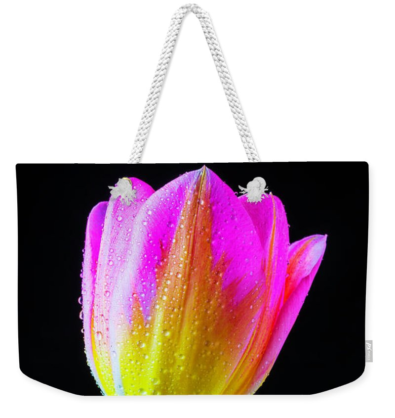 Green Weekender Tote Bag featuring the photograph Dewy Pink Yellow Tulip by Garry Gay