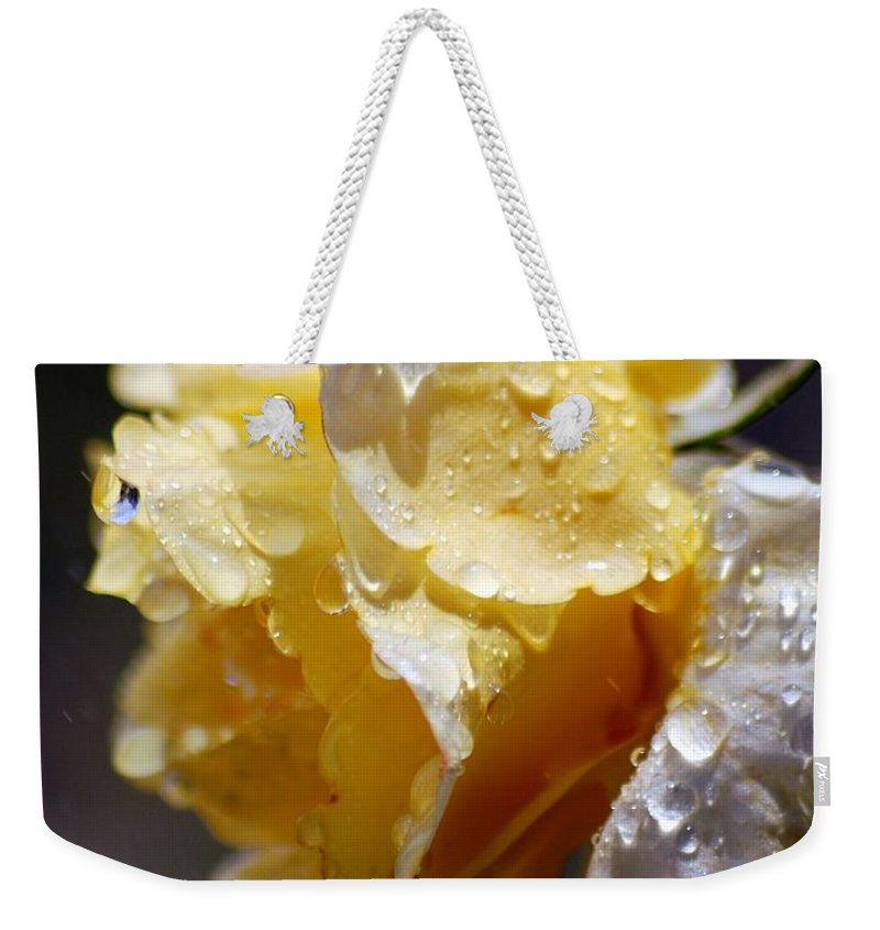 Rose Weekender Tote Bag featuring the photograph Dewy Yellow Rose 2 by Amy Fose
