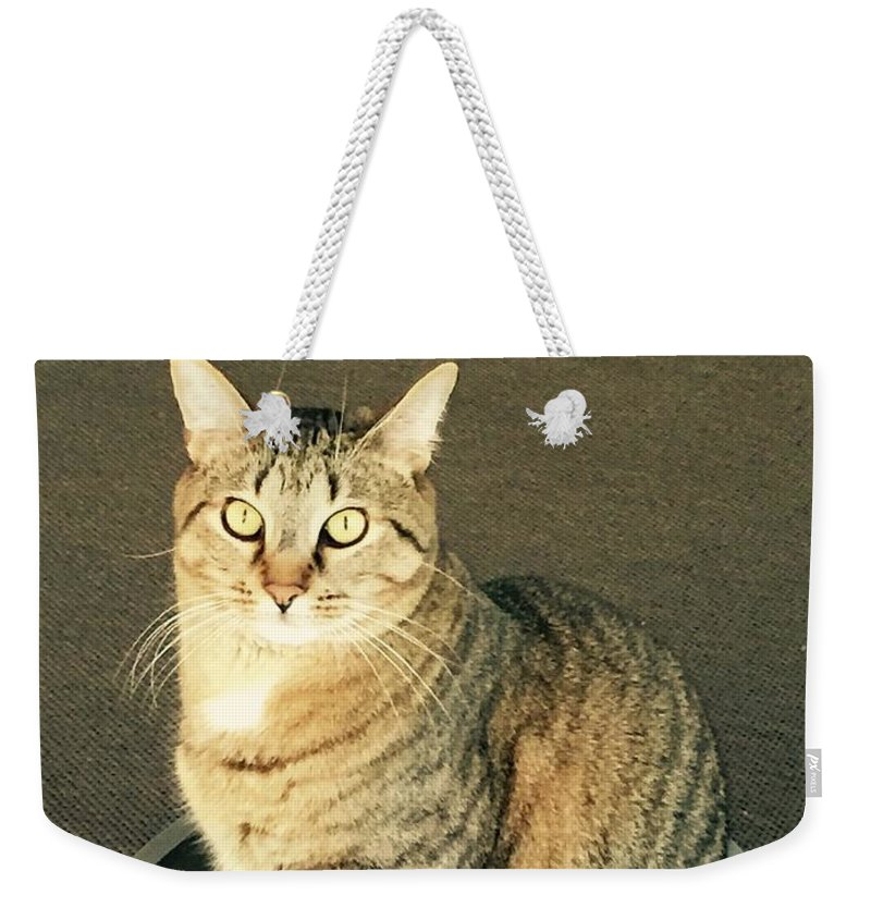 Weekender Tote Bag featuring the photograph Dexter Is Not Amused by Buffy Heslin